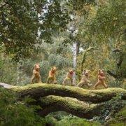 Walking_Bears