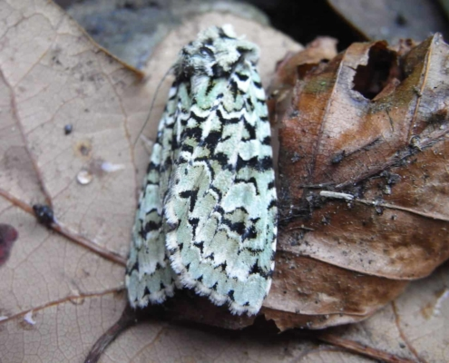 Dusk Moth Hunt Heritage Event