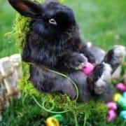 Easter Bunny Workshop Easter Egg Hunt